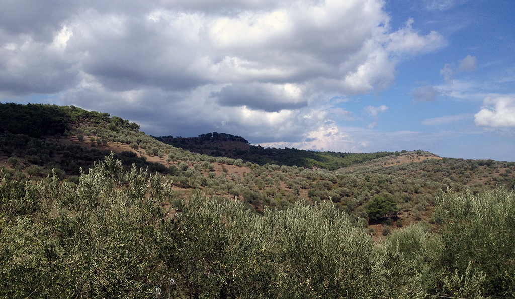 Eλαιώνας Τζωρτζή Μυτιλήνη Λέσβος